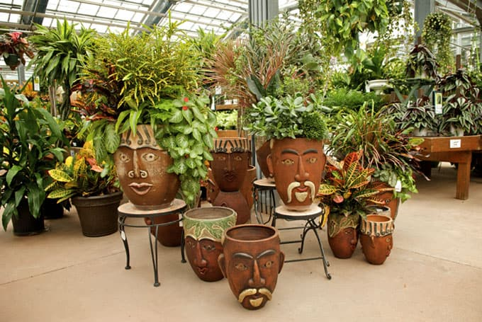 The gallery for unique indoor plants - Interesting house plants ...
